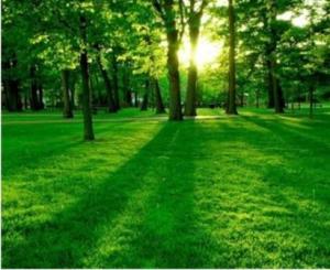 зеленый цвет в психологии, значение