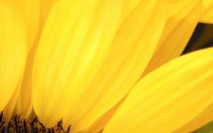 желтый цвет в психологии, описание